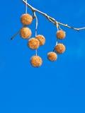 Muttern im Zweig Stockbilder