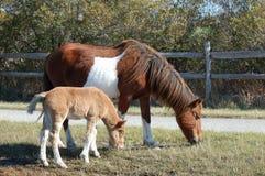 Mutterpferd mit ihrem Fohlen Lizenzfreies Stockbild
