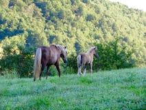 Mutterpferd und -fohlen Stockfotos