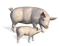 Mutterschwein mit Ferkel Stockfotografie