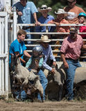 Mutton Busting. Event at the Scott Valley Pleasure Park Rodeo in Etna, California royalty free stock image
