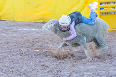 Mutton Busting Royalty Free Stock Images