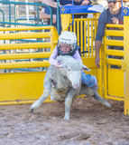 Mutton Busting Stock Photography