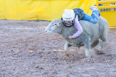 Mutton Busting. LOGANDALE , NEVADA - APRIL 10 : A boy riding on a sheep during a Mutton Busting contest at the Clark County Fair and Rodeo a Professional Rodeo royalty free stock photo