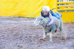Mutton Busting Stock Images