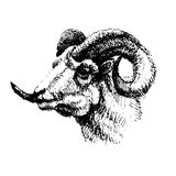 Mutton, sheep, hand graphic, black and white Royalty Free Stock Photos
