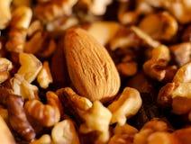 Muttrar, mandlar och valnötter, massor av muttrar Arkivfoton