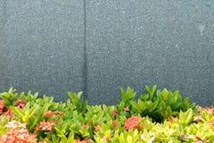 Muur concrete bladeren Stock Afbeelding