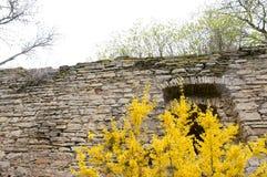 Muur en struiken Royalty-vrije Stock Fotografie