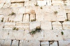 Muur in Jeruzalem Royalty-vrije Stock Afbeeldingen