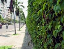 Muur langs de weg met klimop Nha Trang Vietnam wordt overwoekerd dat Royalty-vrije Stock Afbeelding