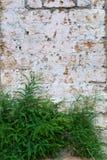 Muur met blokken en struik Stock Fotografie