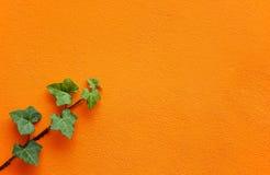 Muur met groene klimoptwijg Royalty-vrije Stock Foto