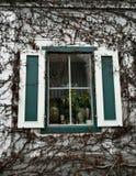 Muur met klimop en venster wordt behandeld dat stock foto's