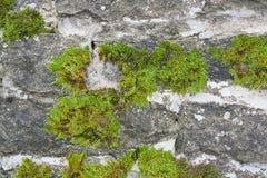 Muur met mos Stock Foto's