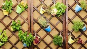 Muur met potten van bloemen wordt verfraaid die Royalty-vrije Stock Afbeelding