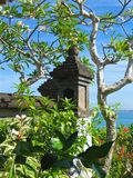Muur met wilde vegetatie Royalty-vrije Stock Fotografie