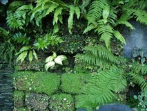 muur tuin van Sotchi Stock Afbeeldingen