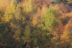Muur van Autumn Forest Royalty-vrije Stock Foto's