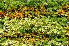Muur van Bladeren Stock Afbeeldingen