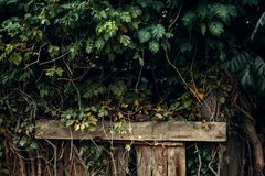 Muur van groene bladeren tegen de achtergrond van houten pijlers royalty-vrije stock afbeeldingen