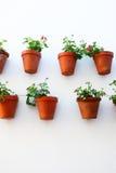 Muur met bloempotten Royalty-vrije Stock Afbeelding