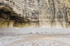 Muur van klippen dichte omhooggaand op Engels kanaalstrand Stock Afbeeldingen
