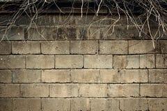 Muur van lichte baksteen en naakte takken die omhoog hierboven plakken van royalty-vrije stock fotografie