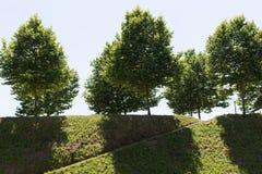 Muur van Luca Royalty-vrije Stock Foto