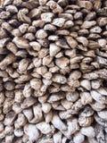 Muur van oester dieshells wordt gemaakt Stock Foto