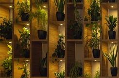Muur van planken met bloemen in pot backlit van lampen Binnenlands royalty-vrije stock afbeeldingen