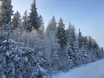 Muur van sneeuwbomen Royalty-vrije Stock Fotografie