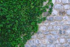 Muur van witte en grijze steen in groene bladeren royalty-vrije stock foto's