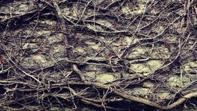 Muur Zen Texture Stock Foto