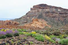 Muurbloem het groeien bij del Teide National Park Stock Afbeelding