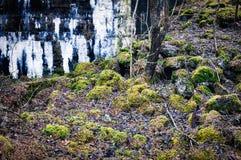 Muurruïnes en mos op stenen Royalty-vrije Stock Afbeeldingen
