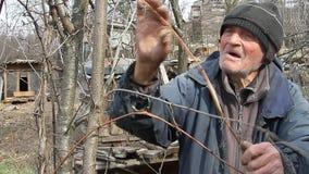 Muy un viejo hombre examina árboles del jardín en la primavera antes de florecer quita las ramas adicionales que se preparan para metrajes