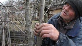 Muy un viejo hombre examina ?rboles del jard?n en la primavera antes de florecer quita las ramas adicionales que se preparan para almacen de metraje de vídeo