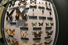 Muzeum Narodowe natura i nauka, Tokyo Zdjęcia Stock