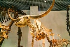 Muzeum Narodowe natura i nauka w Tokio, Japonia Zdjęcia Royalty Free