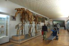Muzeum natura Zdjęcie Royalty Free