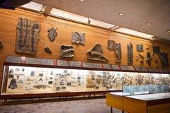 Muzeum paleontology w Moskwa 8146 Fotografia Royalty Free