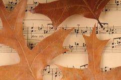 muzyczni wysuszeni liść Fotografia Royalty Free