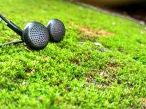 Muzyka i natura Zdjęcie Royalty Free