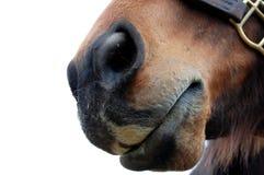 Muzzle Stock Images