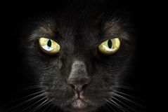 Muzzle of a black cat Stock Photos