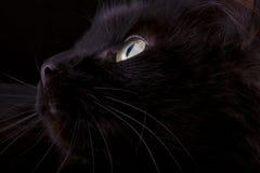 Muzzle of a black cat closeup Stock Photos
