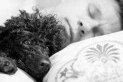 Man and dog lie on a pillow royalty free stock images