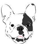 Muzzle Bulldogs Stock Images