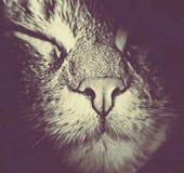 Морда кота крупным планом в темной обработке Stock Photos